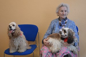 Frau Flügge hatte früher selbst Hunde, die sie sehr streng erzogen hat. Mit den Cockerspaniels, die im Lindenbaum zu Besuch kommen, nimmt sie es aber nicht so genau. © pkh